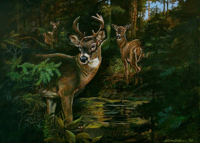 Deer Greeting Card featuring the painting 3 Deer Watching by Alan Carlson