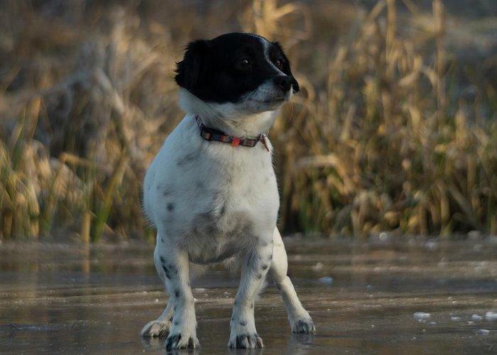 Dog Greeting Card featuring the photograph Dog by Janina Cibulskiene
