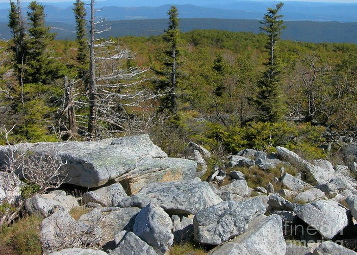 Dolly Sods Greeting Card featuring the photograph Dolly Sods Wilderness by Thomas R Fletcher
