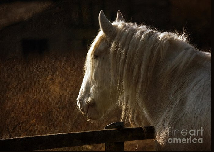 Horse Greeting Card featuring the photograph Horse Portrait by Angel Ciesniarska