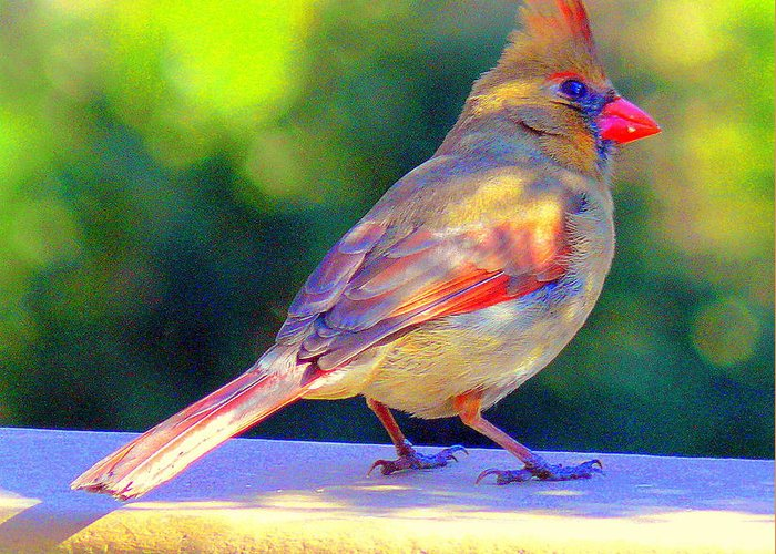Akeview Greeting Card featuring the digital art Northern Cardinal by Aron Chervin