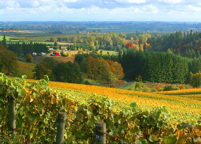 Oregon Wine Country Greeting Card featuring the photograph Oregon Wine Country by Margaret Hood