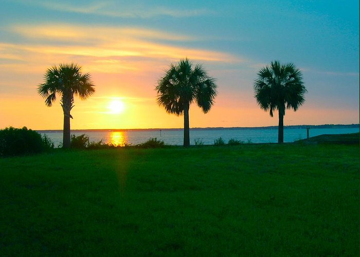 Sunset Greeting Card featuring the photograph 3 Palms by Gila Rayberg