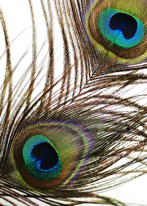 Abstract Greeting Card featuring the photograph Peacock Feathers by Mary Van de Ven - Printscapes