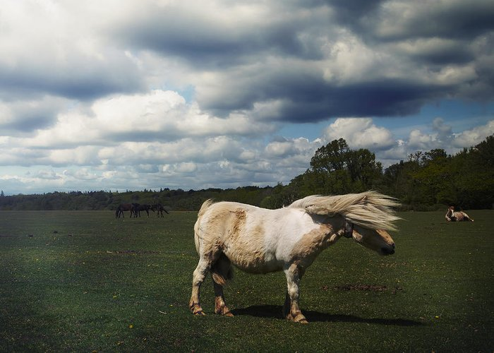 Forelock Photographs Greeting Cards