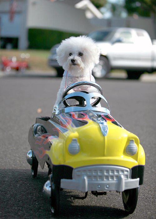 Alternative Energy Greeting Card featuring the photograph Fifi Goes For A Ride by Michael Ledray