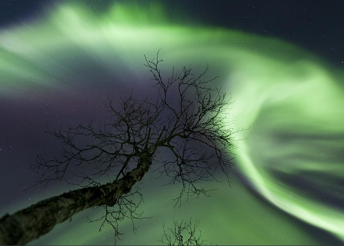 Green Greeting Card featuring the photograph Northern Lights In The Arctic by Arild Heitmann