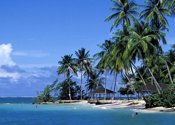Pigeon Point Greeting Card featuring the photograph Pigeon Point On Tobago by Carl Purcell