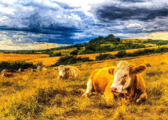 Cows Greeting Card featuring the photograph Resting Cows Art by David Pyatt