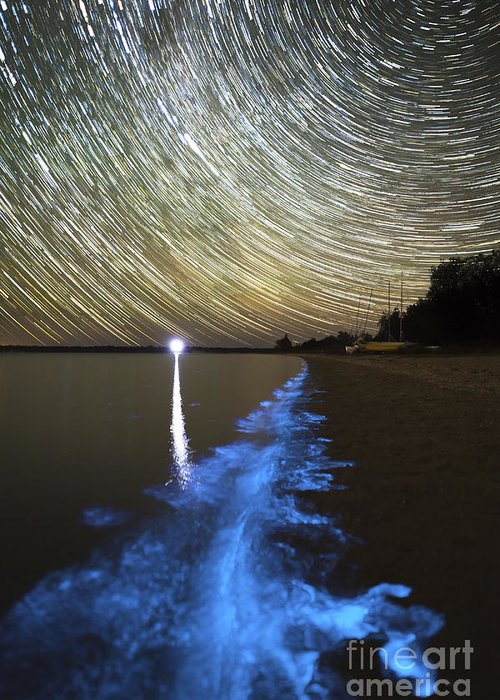 Bioluminescence Greeting Card featuring the photograph Star Trails And Bioluminescence by Philip Hart