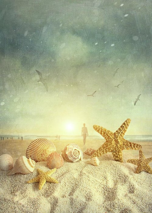 Aquatic Greeting Card featuring the photograph Starfish And Seashells At The Beach by Sandra Cunningham