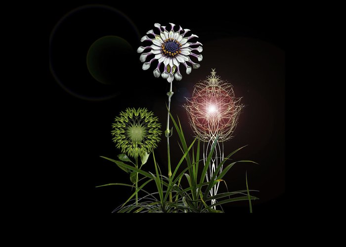 Flora Greeting Card featuring the photograph 4369 by Peter Holme III