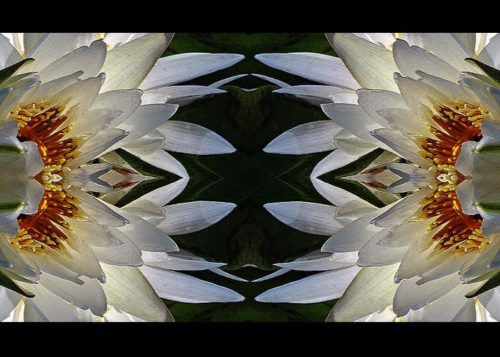 Craquelure Greeting Card featuring the photograph White Lotus Mandala by Daniel Unfried