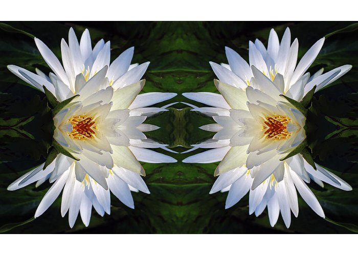 Unnatural Nature Greeting Card featuring the photograph White Lotus Mandala by Daniel Unfried