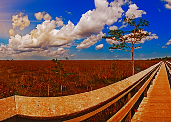 Everglades Panorama Greeting Card featuring the photograph 4x1 Everglades Panorama Number Two by Rolf Bertram