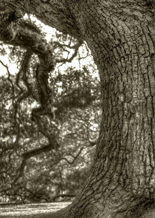 Live Oak Greeting Card featuring the photograph Angel Oak Live Oak Tree by Dustin K Ryan