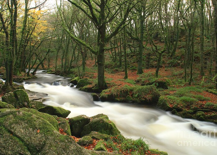 Autumn Greeting Card featuring the photograph Autumn At Golitha Falls by Carl Whitfield