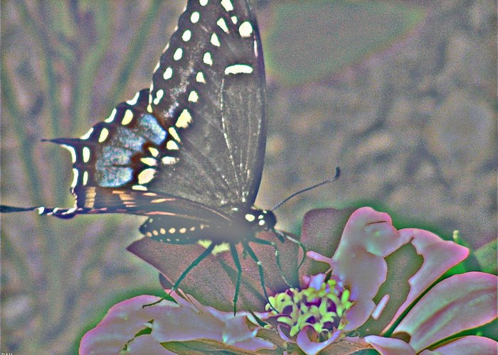 Butterfly Collection Greeting Card featuring the photograph Butterfly Collection by Debra   Vatalaro