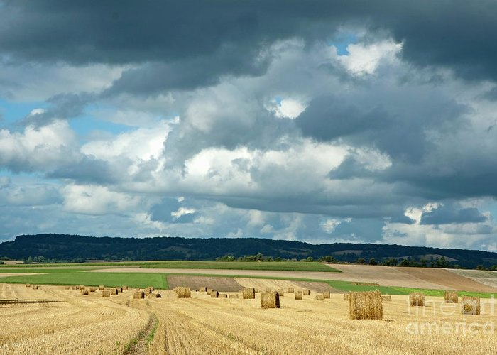 Agricultural Greeting Card featuring the photograph Hay Bales In Harvested Corn Field by Sami Sarkis