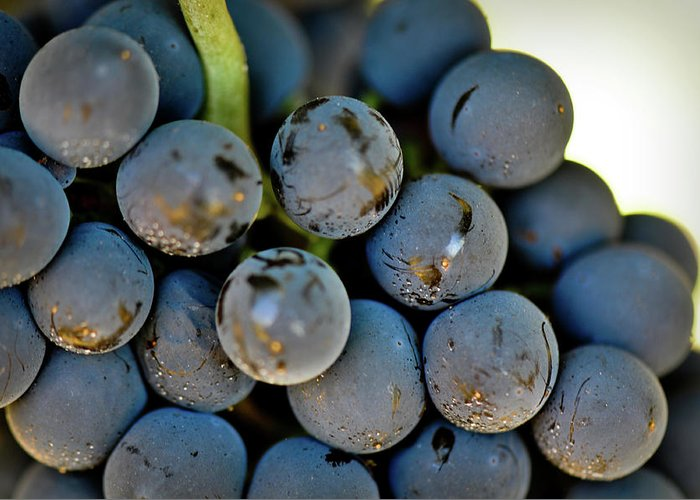 Green Greeting Card featuring the photograph Red Grapes by Brandon Bourdages