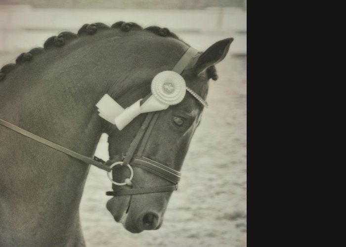 Horse Greeting Card featuring the photograph Victory Gallop by JAMART Photography