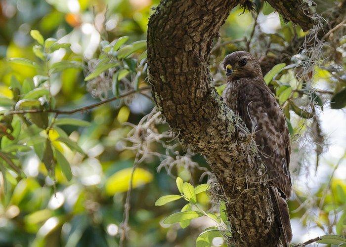 Bird Greeting Card featuring the photograph Birds by Karen Hart