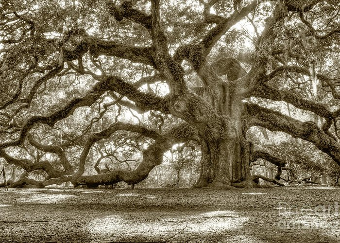Southern Photographs Greeting Cards