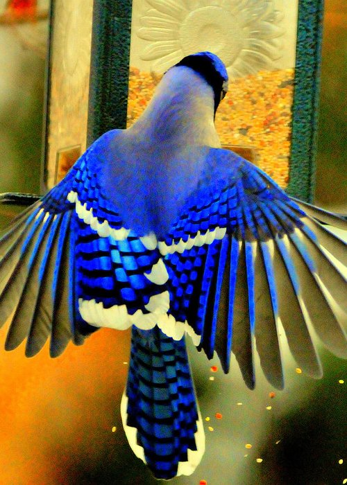 Lake Y Greeting Card featuring the digital art Blue Jay by Aron Chervin