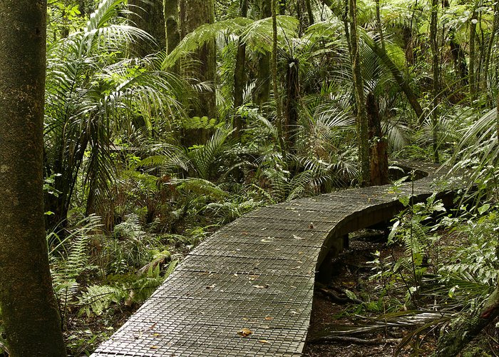 Rain Forest Greeting Card featuring the photograph Forest Boardwalk by Les Cunliffe