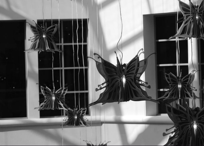 Black And White Greeting Card featuring the photograph Hanging Butterflies by Rob Hans