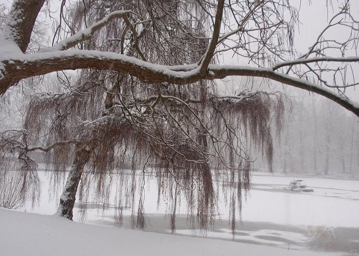 Winter Greeting Card featuring the photograph Winter Beauty by Valia Bradshaw