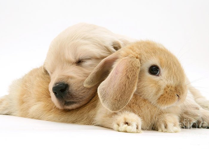 Sandy Lop Rabbit Greeting Card featuring the photograph Rabbit And Puppy by Jane Burton