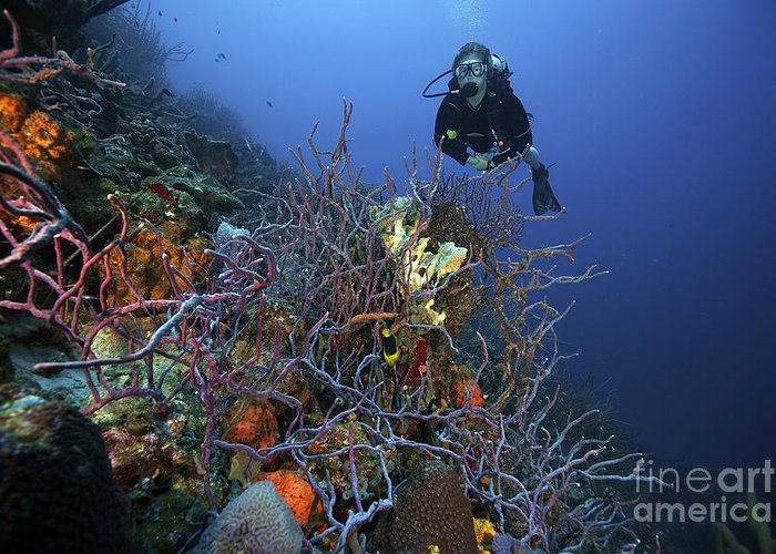 Bonaire Greeting Card featuring the photograph Scuba Diver Swims Underwater Amongst by Terry Moore