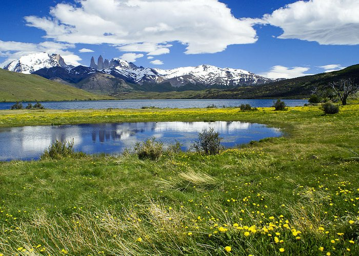 Patagonia Greeting Card featuring the photograph Springtime in Torres del Paine by Michele Burgess