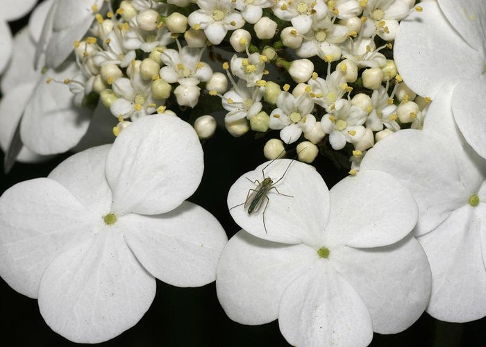 Flower Greeting Card featuring the photograph Flower 80 by Masami Iida