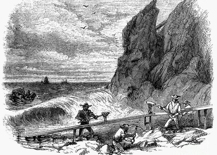 1850s Greeting Card featuring the photograph California Gold Rush by Granger