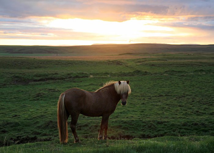 Horse Greeting Card featuring the photograph Iceland by Kurt Williams
