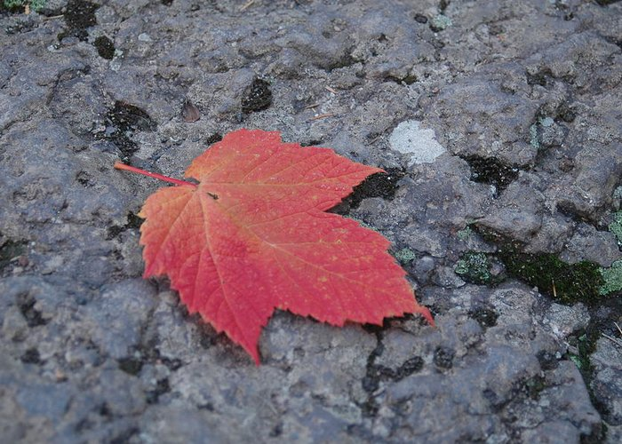 Leaf Greeting Card featuring the photograph Untitled by Kathy Schumann
