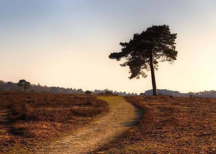 Rockford Common Greeting Card featuring the photograph New Forest - England by Joana Kruse