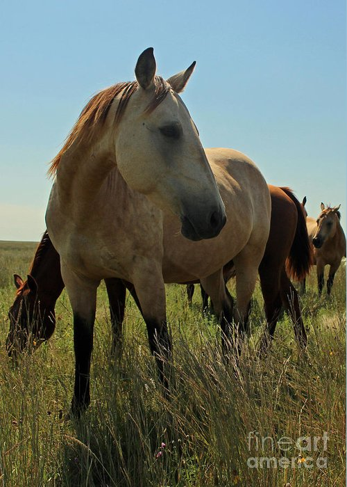 Horses Greeting Card featuring the photograph A Bit Camera Shy by Janette Duffield