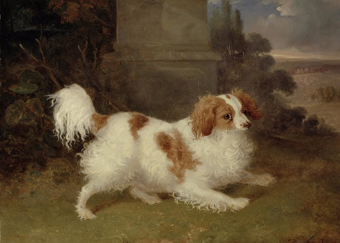 Blenheim Greeting Card featuring the painting A Blenheim Spaniel by William Webb