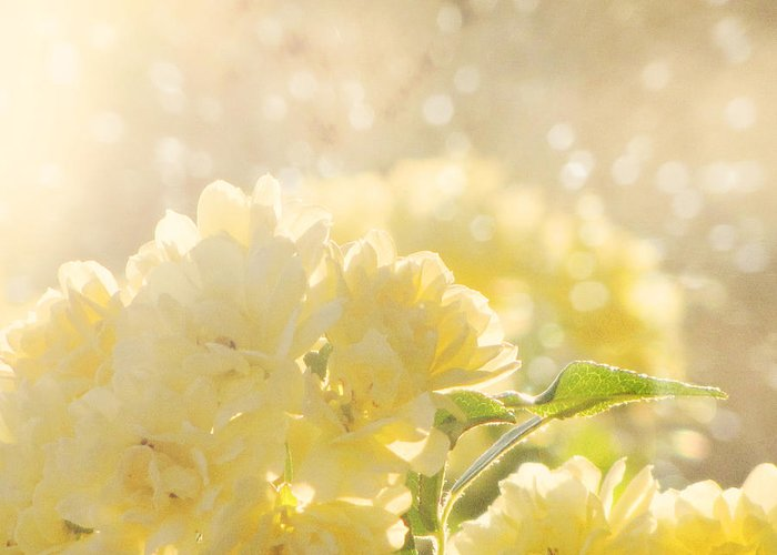 Flower Photography Greeting Card featuring the photograph A Chance Of Showers by Amy Tyler