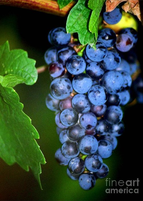 Wine Greeting Card featuring the photograph A Cluster Of Cab by Laurel Sherman