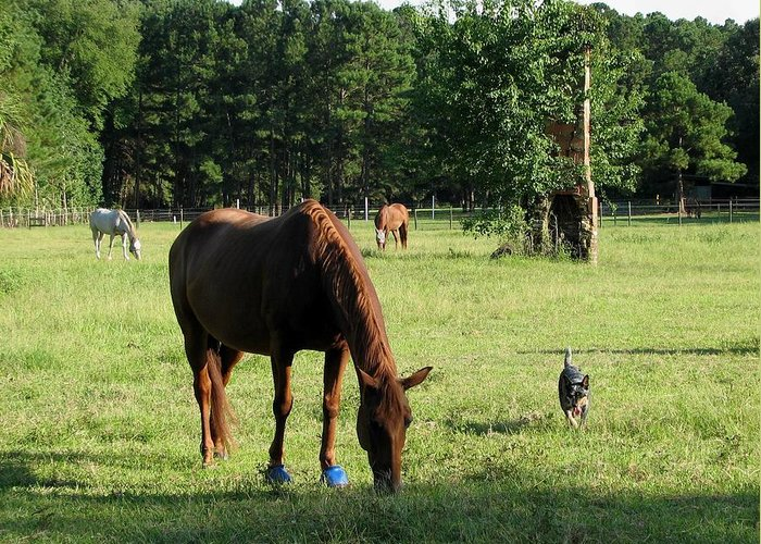 Horse Greeting Card featuring the photograph A Day At Chimney Field 1 by J M Farris Photography