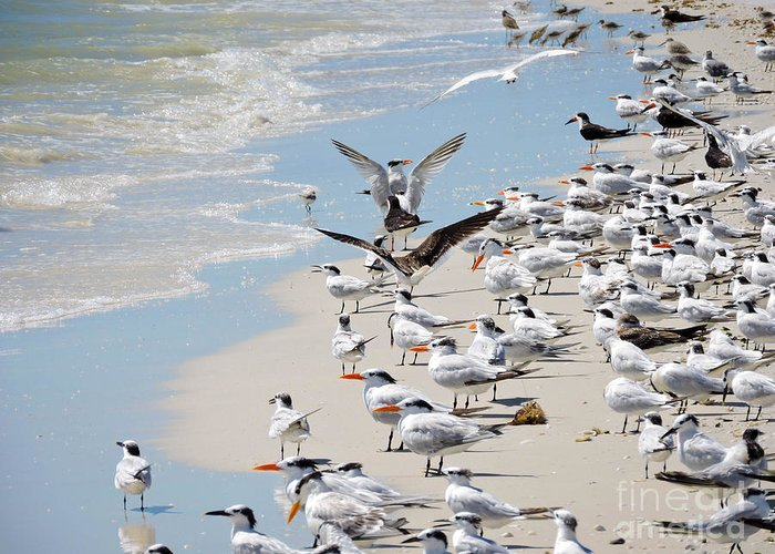 Seagulls Greeting Card featuring the photograph A Flock Of Seagulls by Marilee Noland
