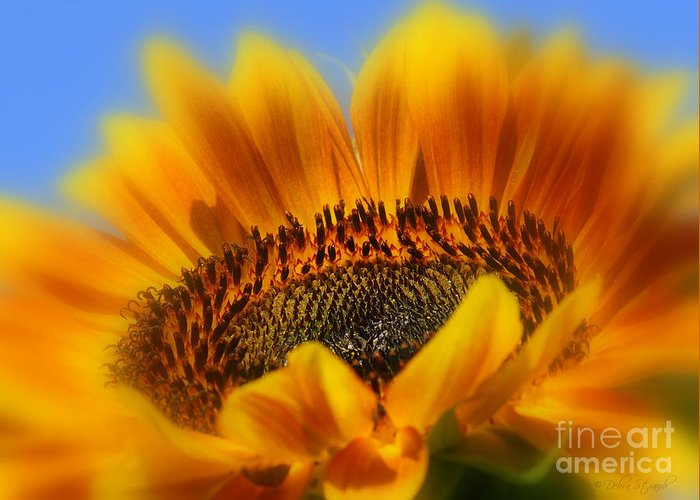 Sunflower Greeting Card featuring the photograph A Floral Sunset by Debra Straub