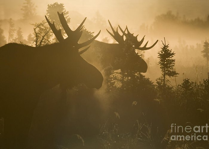 Moose Greeting Card featuring the photograph A Foggy Morning by Tim Grams