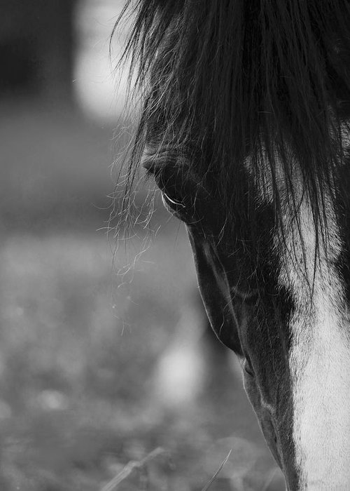 Horse Greeting Card featuring the photograph A Gentle Face by Rachel Morrison
