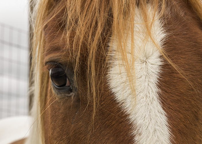Horse Greeting Card featuring the photograph A Gentle Soul by Lisa Hurylovich