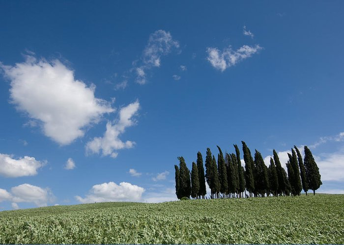Photography Greeting Card featuring the photograph A Group Of Cypress Trees Dot A Tuscan by Joel Sartore